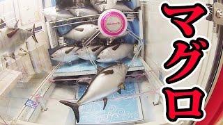 getlinkyoutube.com-UFOキャッチャーで本マグロを大漁一本釣り【クレーンゲーム】