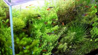 getlinkyoutube.com-#7.小さな森に暮らす妖精たち(Aquascaping - Fairies of small forest)