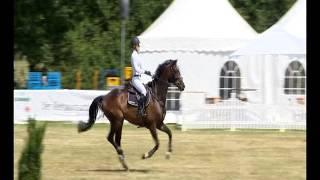 Hilmar Meyer Sporthorses Balotelli 2017 Isernhagen S