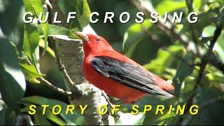 Gulf Crossing: Story of Spring