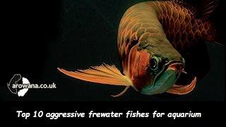 getlinkyoutube.com-Top 10 aggressive freshwater fish for aquarium