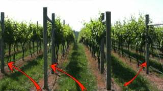 getlinkyoutube.com-Grape Trellis Systems