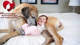 Una Niñera Golpea Brutalmente al Bebé que Cuidaba. El Perro de la Casa es Testigo
