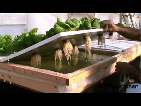 Floating Raft Hydroponics Update Dec 2012