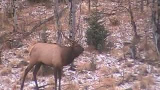 getlinkyoutube.com-Elk Hunt in Colorado