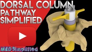 getlinkyoutube.com-Dorsal Column Medial Leminiscus Pathway  Made Easy - Spinal Cord Tracts 1