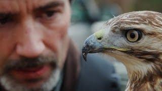 getlinkyoutube.com-The Goldsboro Falconry Meet