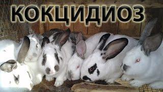 Кокцидиоз у кроликов – лечение болезни, симптомы, профилактика.