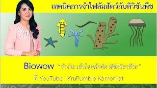 getlinkyoutube.com-เทคนิคการจำไฟลัมสัตว์และดิวิชันพืช By KruPumBiO