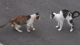 getlinkyoutube.com-ドキュメント『猫が友達になる瞬間』