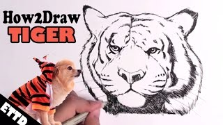 How to Draw a Tiger (Lost Episode) - Easy Things to Draw