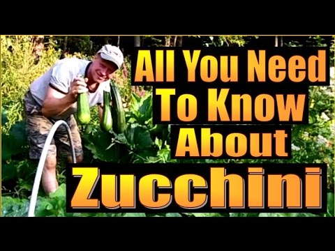 ALL YOU NEED TO KNOW ABOUT ZUCCHINI. Low Carb Pasta Replacement ideas.