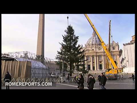 Christmas tree arrives at the Vatican