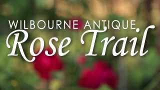 Wilbourne Antique Rose Trail