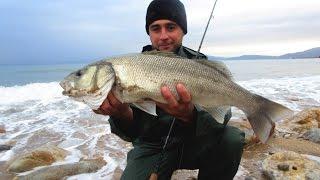 getlinkyoutube.com-Sea bass spinning in Greece