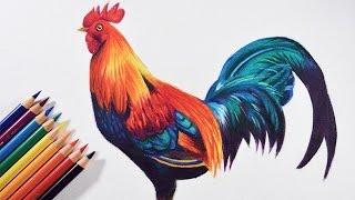 getlinkyoutube.com-How to draw a colorful bird (Rooster) - Faber castell polychromos pencils.