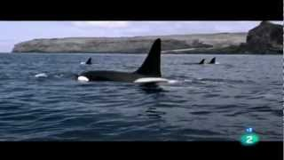 getlinkyoutube.com-ORCAS ASESINAS