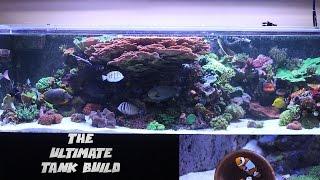 getlinkyoutube.com-Ep 2. Picking up My Reef Savvy Tank