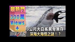 getlinkyoutube.com-一尾3公尺大白鯊就這樣屍骨無存 深海大海怪之謎!?20140609-1