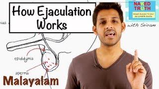 How Ejaculation Works - Malayalam