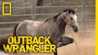 getlinkyoutube.com-Breaking Wild Horses | Outback Wrangler