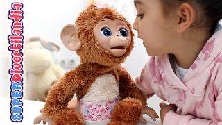 getlinkyoutube.com-Moni Monita de FurReal Friends. Un bebé Mona de Hasbro (Anna Banana).