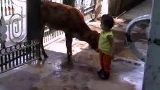getlinkyoutube.com-Animals Attack Kids