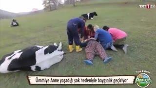 getlinkyoutube.com-Ana Ocağı İnekler Zehirlendi