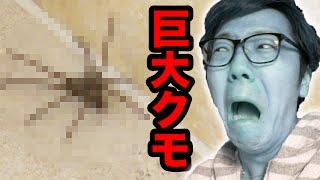 getlinkyoutube.com-【閲覧注意】部屋に巨大クモが出現し大パニック!