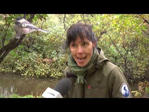 40 ans de la Réserve nationale de faune du Cap-Tourmente