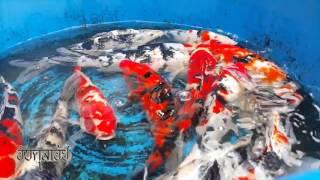 getlinkyoutube.com-10 ปลาสวยงามน่าเลี้ยง
