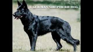 getlinkyoutube.com-Top Guard Dogs HD(1080p)