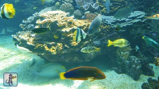 getlinkyoutube.com-★❤★ BEAUTIFUL CORAL REEF AQUARIUM・MARINE OCEAN FISH TANK・BEST RELAX MUSIC・1080P HD ★❤★