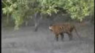 getlinkyoutube.com-WWF-India: Sundarbans Future Imperfect