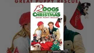 getlinkyoutube.com-12 Dogs Of Christmas: Great Puppy Rescue