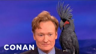 getlinkyoutube.com-Animal Expert David Mizejewski: Black Palm Cockatoo & Crocodile - CONAN on TBS
