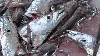 getlinkyoutube.com-次々と太刀魚をさばいていく漁師の奥さん