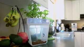 getlinkyoutube.com-Home Aquaponics Kit- Self-Cleaning Fish Tank That Grows Food by Nikhil & Alejandro — Kickstarter