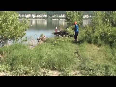 Pescuit  scrumbie la taparina cu muste artificiale Islaz-Olt 2013