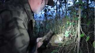 getlinkyoutube.com-Modern Trapping Part 17 Coyote in a Fence Snare