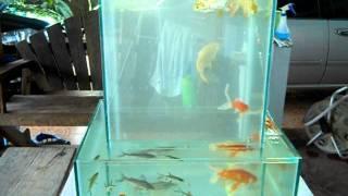 getlinkyoutube.com-ตู้ปลาแปลก ๆ