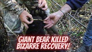 getlinkyoutube.com-Giant 500-pound bear shot with a bow