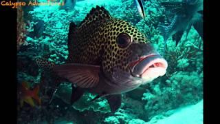 getlinkyoutube.com-Tubbataha Reef 2014