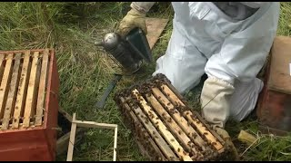 getlinkyoutube.com-Beekeeping - How to make lots more Bees - Using the Rose Hive Method Part 3