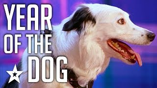 Celebrating-THE-BEST-DOG-AUDITIONS-TRICKS-EVER-On-Got-Talent-From-Around-The-World width=