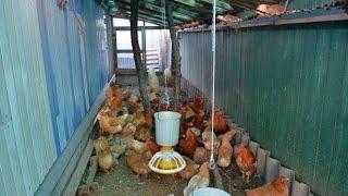 getlinkyoutube.com-Помещение для содержания птицы. Хозяйство Валентина Сохорева