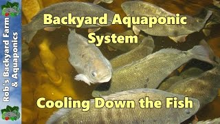 getlinkyoutube.com-Backyard Aquaponic IBC system update, Cooling down the fish.. 11th January 2013..