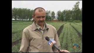 getlinkyoutube.com-выращивание чеснока АгроМир Белогорья село Сурково