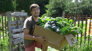 getlinkyoutube.com-Large Harvest From The 100% Organic Garden