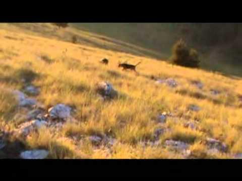 Κυνήγι λαγού στο Ξηρολίβαδο - Xirolivado hare hunting - part 2